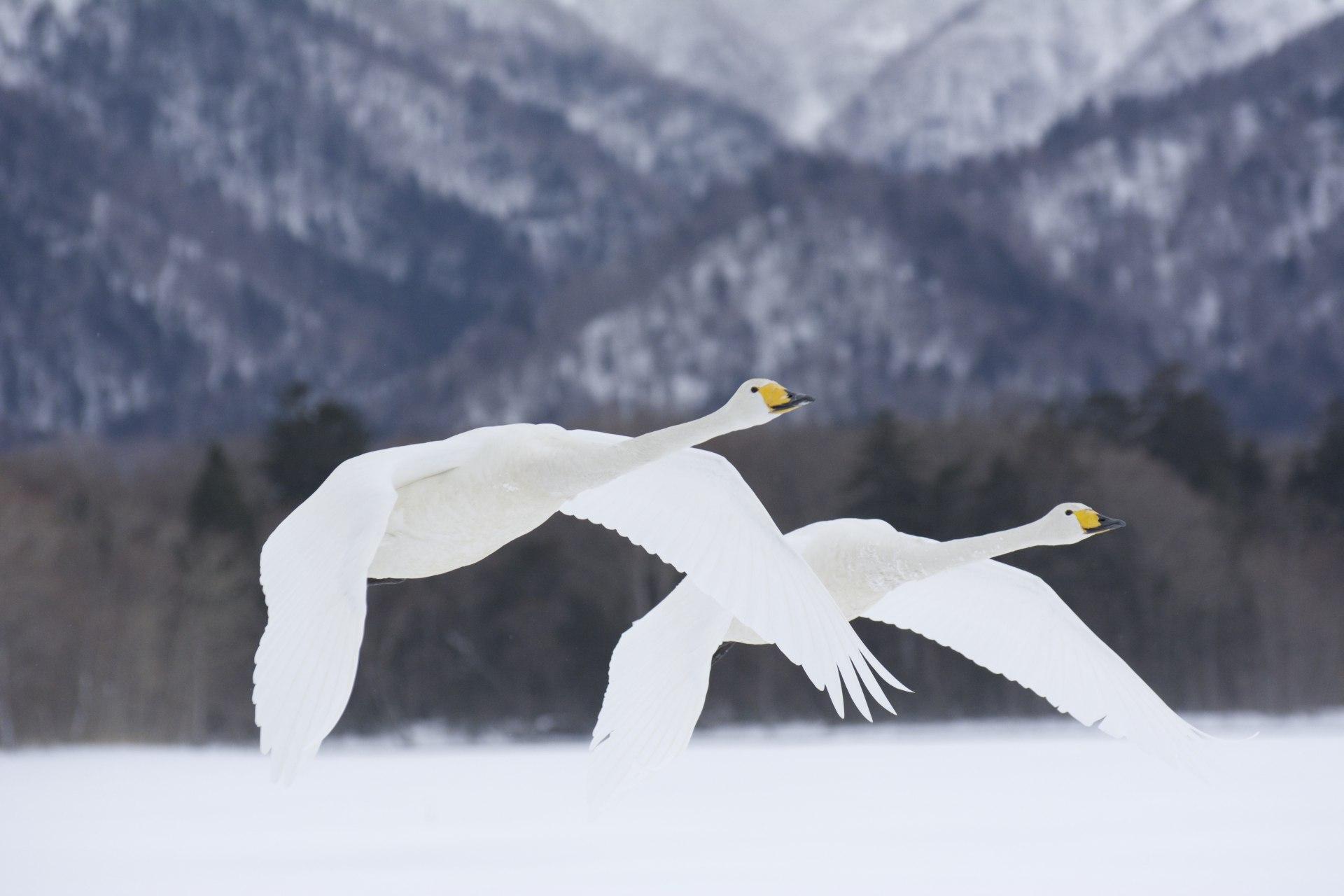 Wingmen by Florian Nohring